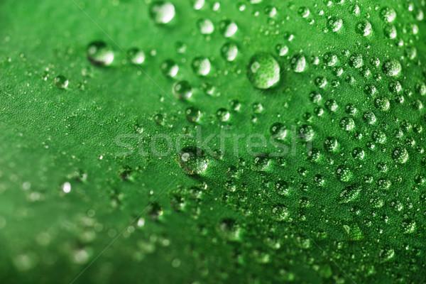 Gouttes d'eau feuille verte eau feuille beauté Photo stock © taden
