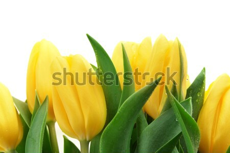 Giallo tulipani bouquet fresche vaso Pasqua Foto d'archivio © taden