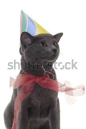 cat with santa's hat Stock photo © taden