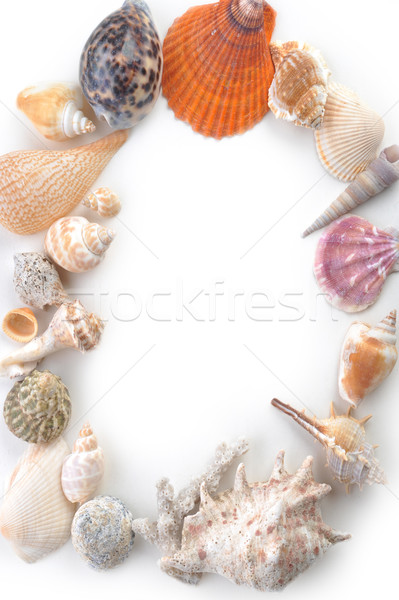sea cockleshells Stock photo © taden