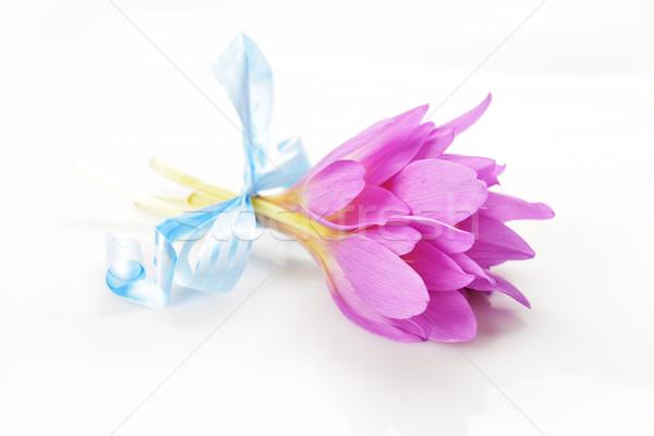 Bouquet crocus viola fiore fiore tempo Foto d'archivio © taden