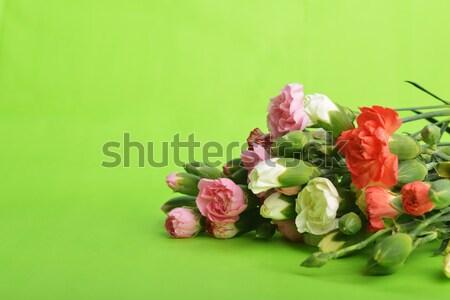 Flores clavel ramo colorido flor Foto stock © taden