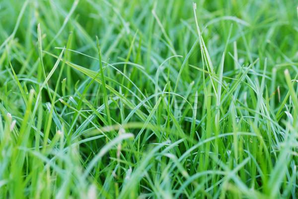 ストックフォト: 新鮮な · 緑の草 · クローズアップ · 屋外 · 花 · 春