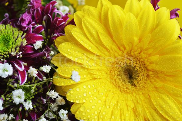 花束 花 異なる 黄色 フレーム 白 ストックフォト © taden
