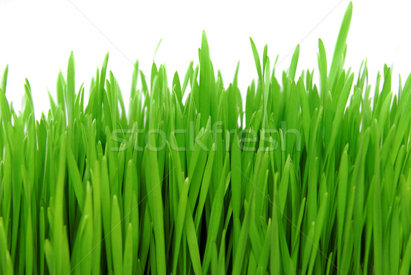 fresh grass isolated on white Stock photo © taden