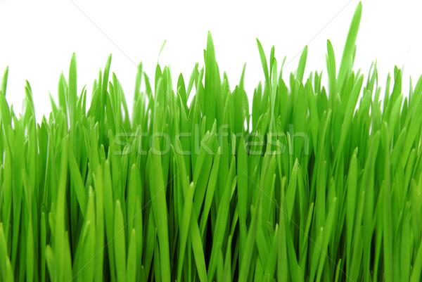 Сток-фото: свежие · трава · изолированный · белый · цветок · весны