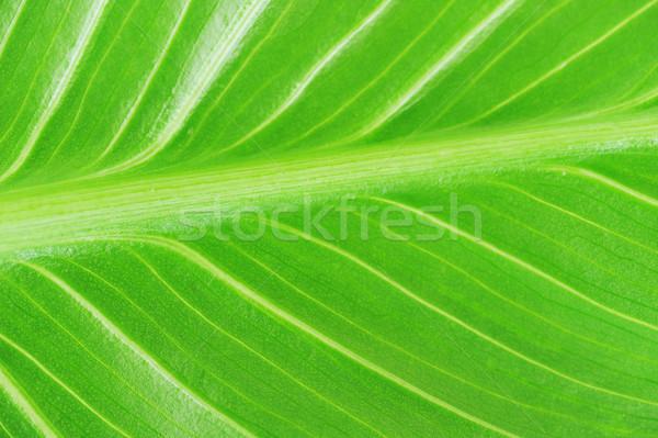 Jasne zielony liść tekstury charakter roślin Zdjęcia stock © taden