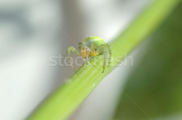 зеленый Spider спрей глазах ног Scary Сток-фото © taden