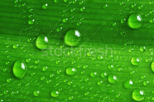Hoja verde gotas de agua agua resumen verano Foto stock © taden