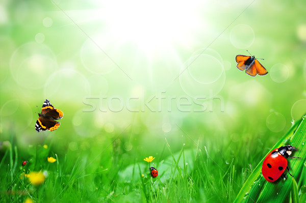 Sonnig grünen Bereich Marienkäfer Schmetterling Blume Stock foto © taden