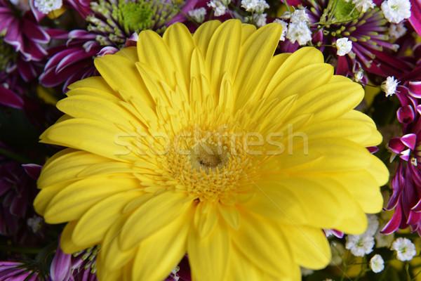 Buket çiçekler farklı sarı çerçeve beyaz Stok fotoğraf © taden