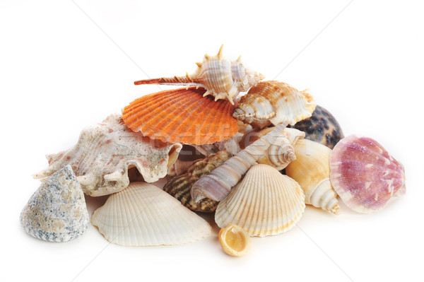 colored sea cockleshells and starfish Stock photo © taden