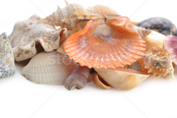 Multi-coloured sea cockleshells and starfish Stock photo © taden