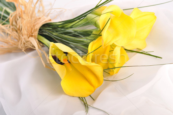 yellow flowers on  white  Stock photo © taden