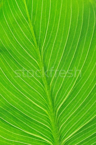 Luminoso foglia verde texture natura impianto Foto d'archivio © taden