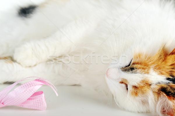 白 猫 孤立した 髪 肖像 ストックフォト © taden