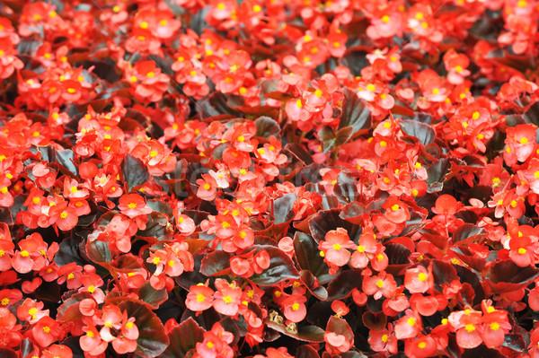 Rood zomer tuin landscaping stad park Stockfoto © taden
