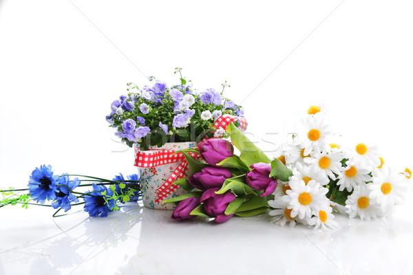 campanula flowers Stock photo © taden