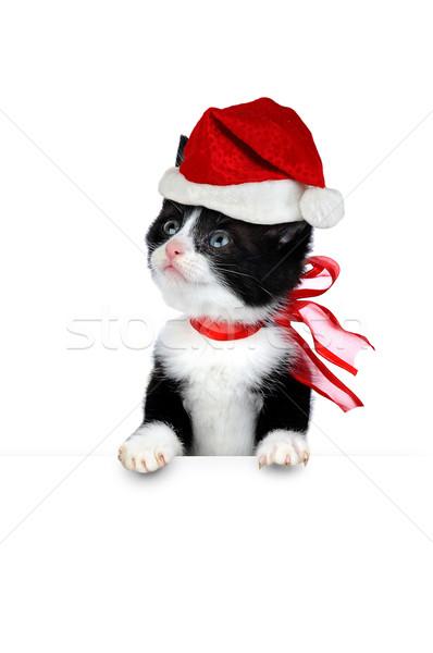かわいい 子猫 白 小 孤立した 猫 ストックフォト © taden