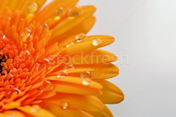 желтый цветок весны природы лет Сток-фото © taden