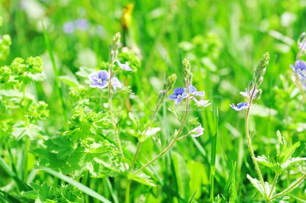 花 春 ファーム フィールド 花 ストックフォト © taden
