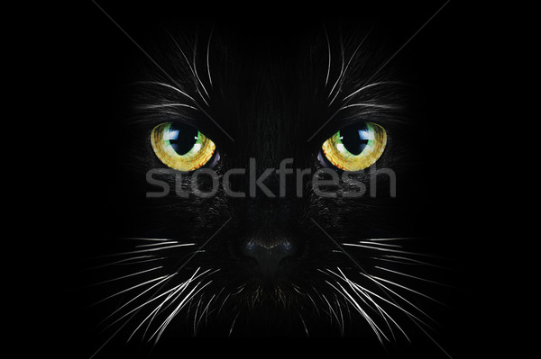 Fekete macska közelkép portré haj állatok fekete Stock fotó © taden
