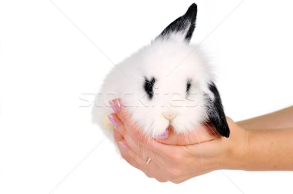 Witte konijn handen Pasen kunst Stockfoto © taden