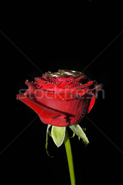Rose Red anillos aislado negro boda corazón Foto stock © taden