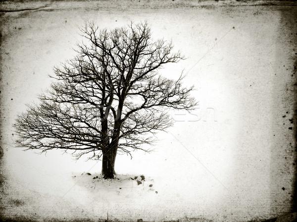 Egyedüli fa levelek tél felhők természet Stock fotó © taden