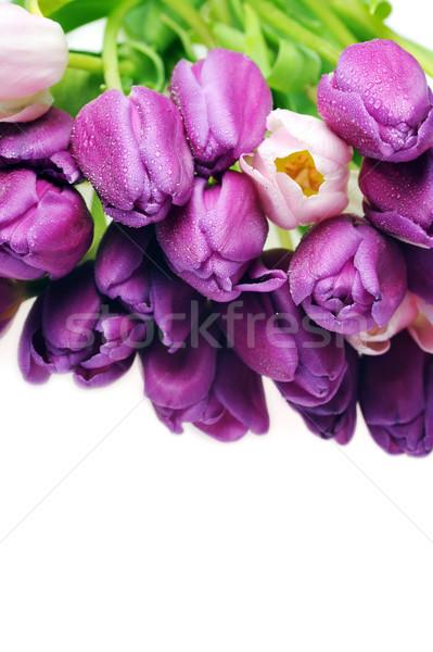 Lale buket çok pembe mor çiçekler Stok fotoğraf © taden