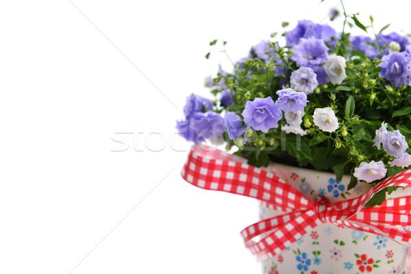 Flores azul maceta belleza ramo decoración Foto stock © taden