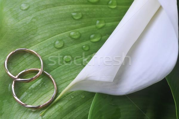Foto stock: Flor · blanca · hojas · verdes · anillos · de · boda · verano · espacio