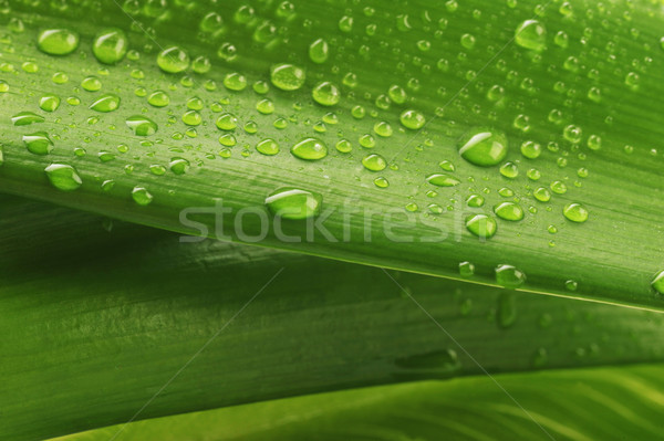 Zöld levél vízcsepp közelkép víz növény csepp Stock fotó © taden