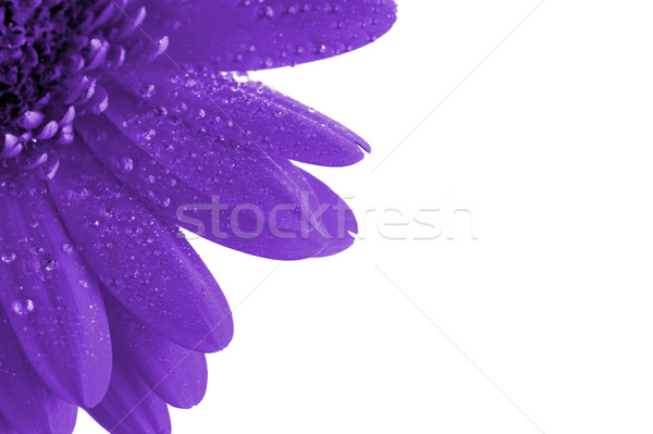 fantasy purple flower  Stock photo © taden