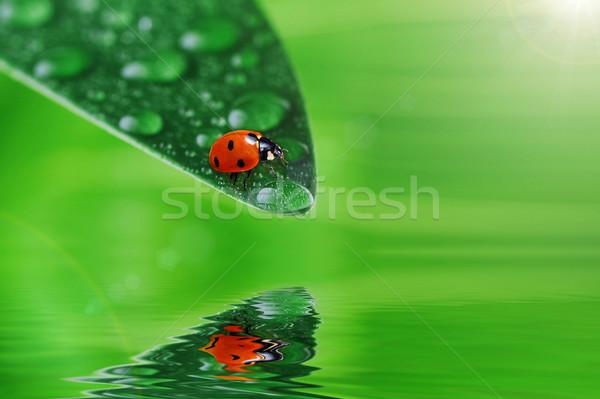 Green leaf Wassertropfen Wasser abstrakten Sommer Stock foto © taden