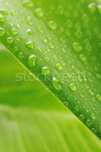 зеленый завода лист капли воды свежие Сток-фото © taden