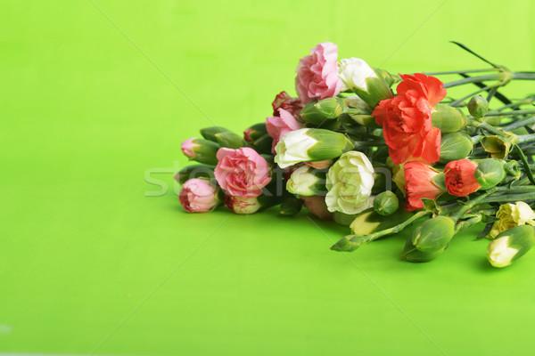 цветы гвоздика букет красочный цветок Сток-фото © taden