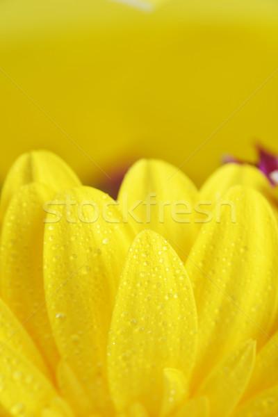 Fiore giallo giallo fiore primavera natura Foto d'archivio © taden
