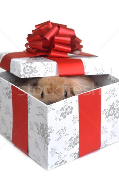 Scatola regalo rosolare soffice coniglio finestra regalo Foto d'archivio © taden