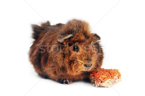 Brun guinée porc blanche alimentaire animaux porc Photo stock © taden