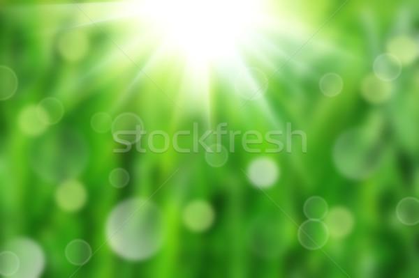 çiy yeşil ot ıslak bahar doğa Stok fotoğraf © taden