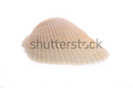 sea cockleshell lies on white  Stock photo © taden