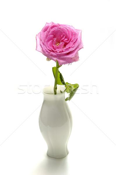 Розовые розы изолированный белый свадьба природы Сток-фото © taden