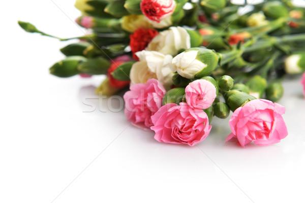 Virágok szegfű közelkép virágcsokor színes virág Stock fotó © taden