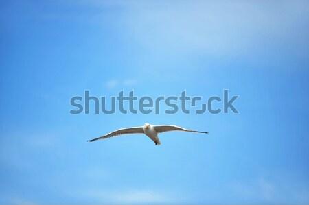 Sirály égbolt kék ég felhők tengerpart természet Stock fotó © taden
