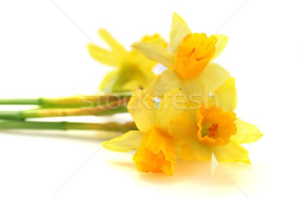 黄色 水仙 花 春 美 花束 ストックフォト © taden