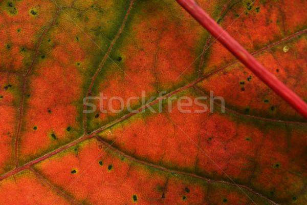 Najaar blad keurig kleurrijk bos Stockfoto © taden