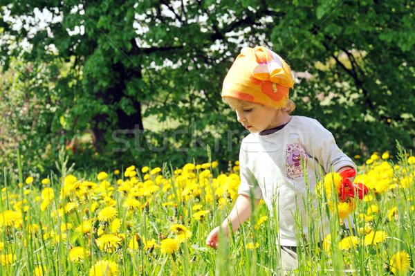 Meisje veld meisje bloem gras Stockfoto © taden