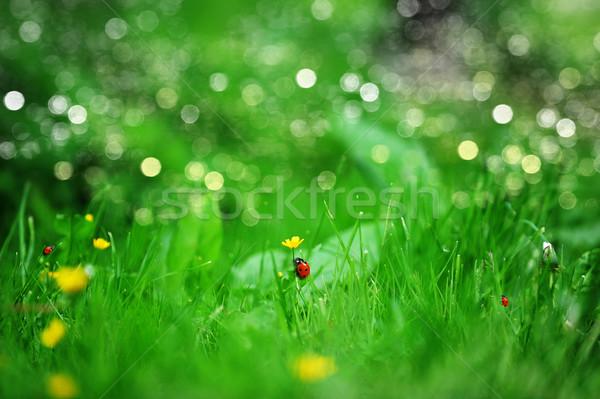 Sarı çiçekler bahar çiftlik alan çiçek Stok fotoğraf © taden