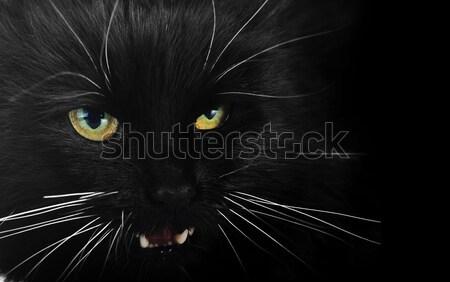 black cat Stock photo © taden